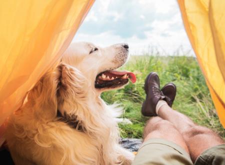 vacanza con cane lago garda